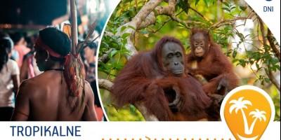 Tropikalne Borneo w 8 dni